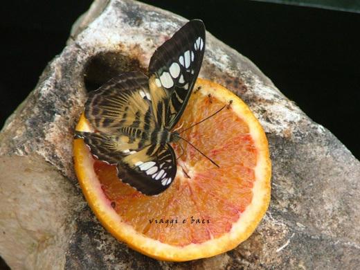 casa-delle-farfalle-101