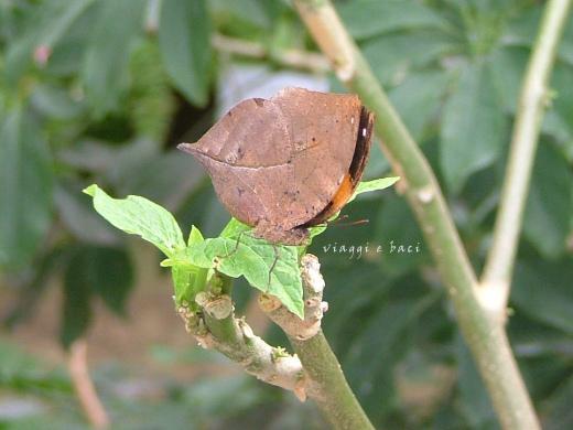 casa-delle-farfalle-41