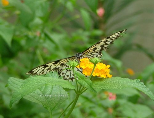The Butterflies House: a must see on the Adriatic Coast