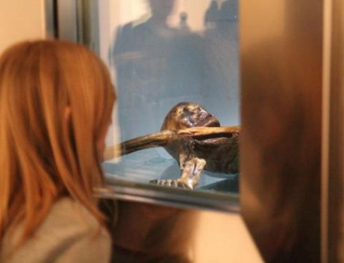 Otzi the Italian mummy