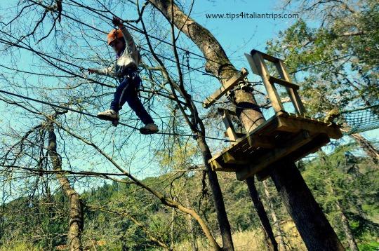 Climbing trees...