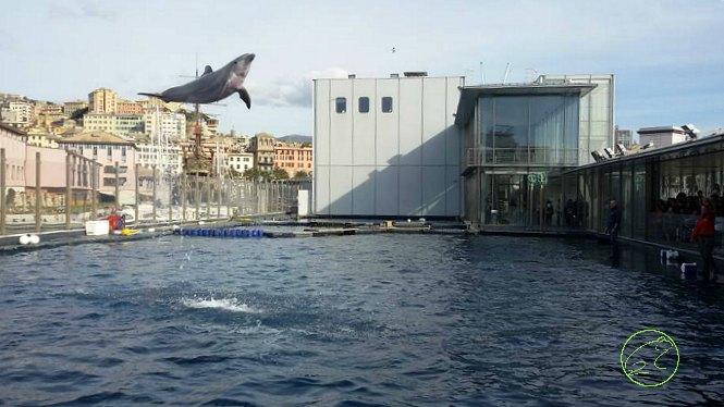 Aquarium Genoa How To Organise A Trip Tips 4 Italian Trips